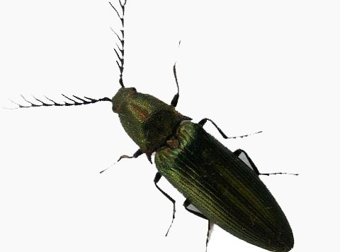 image of a beetle
