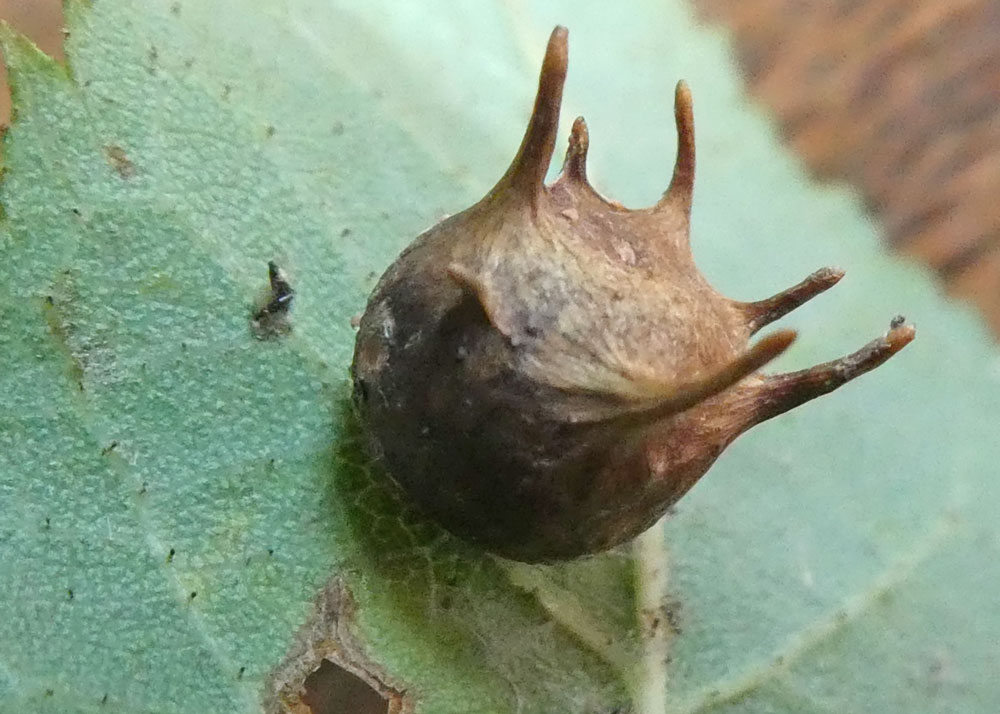 Photo of Sputnik Gall
